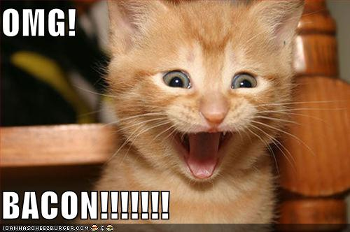 http://www.bannerblog.com.au/news/picts/funny-pictures-kitten-is-excited-about-bacon.jpg