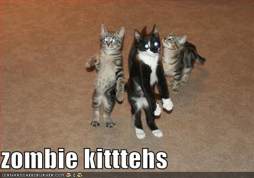 funny-pictures-these-cats-are-zombies.jp