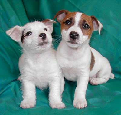 Puppies on Digital Puppies On Bannerblog News